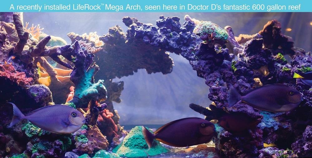Life Rock Dr D Reef