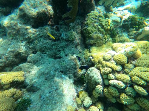 Looe Key coral 3