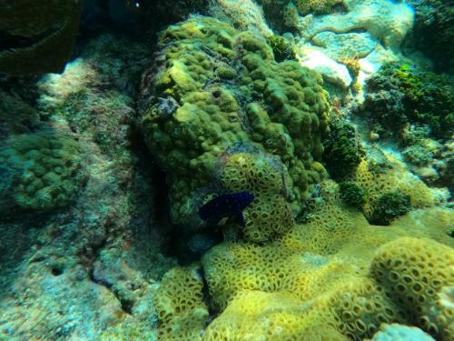 Looe Key coral