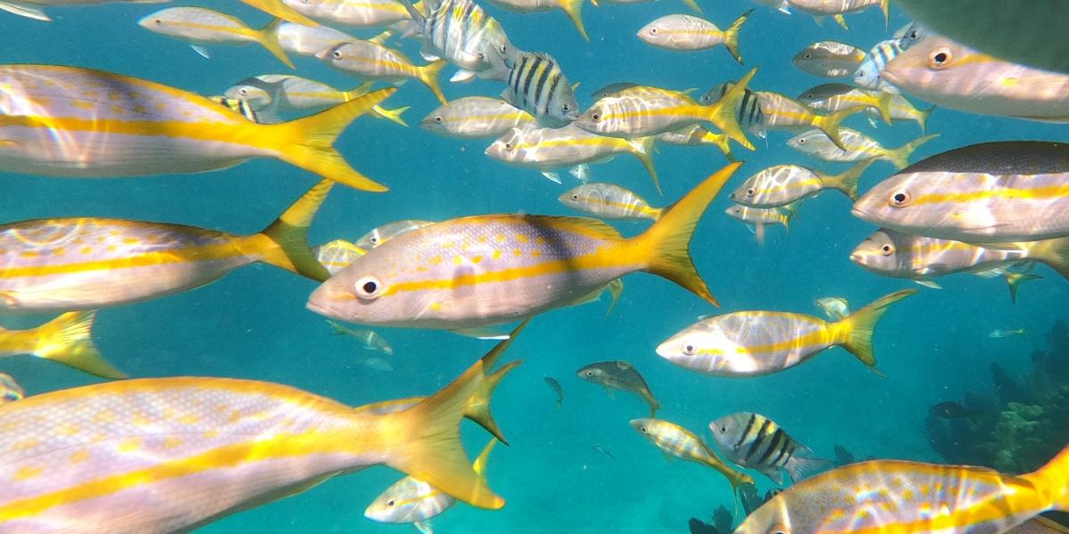 Loon Key Fish
