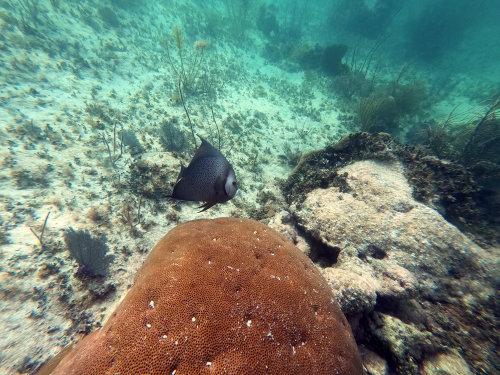 Newfound Harbor Key reef